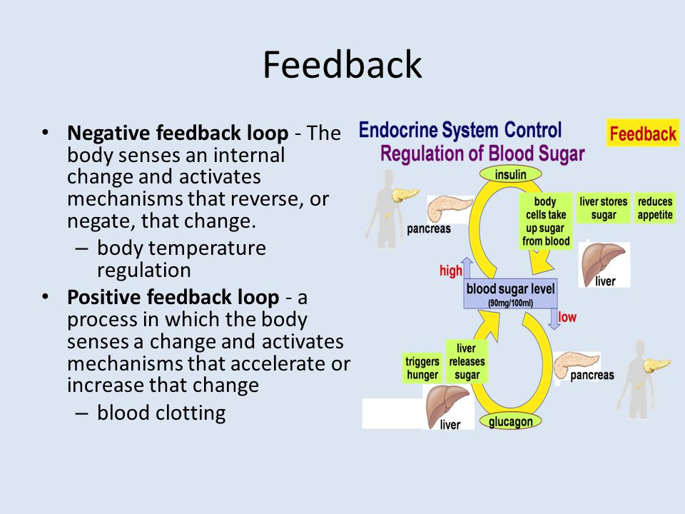 Feedback Negative feedback loop - The body senses an internal change and activates mechanisms that reverse, or negate, that change.
