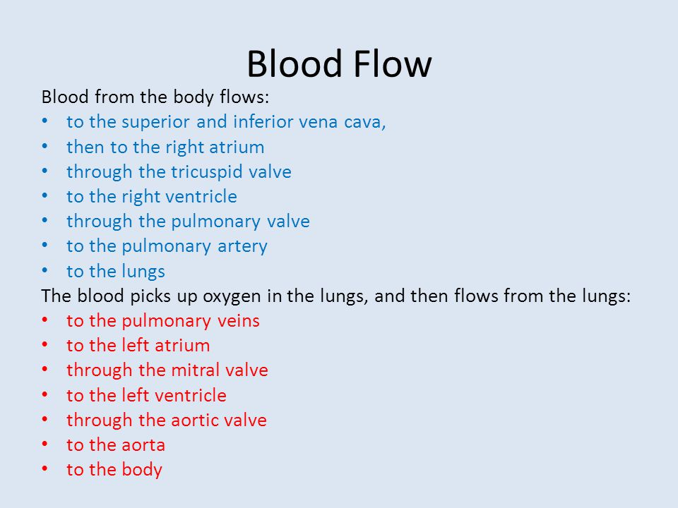 Blood Flow Blood from the body flows:
