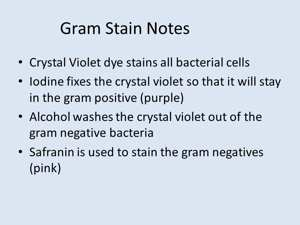 Gram Stain Notes Crystal Violet dye stains all bacterial cells