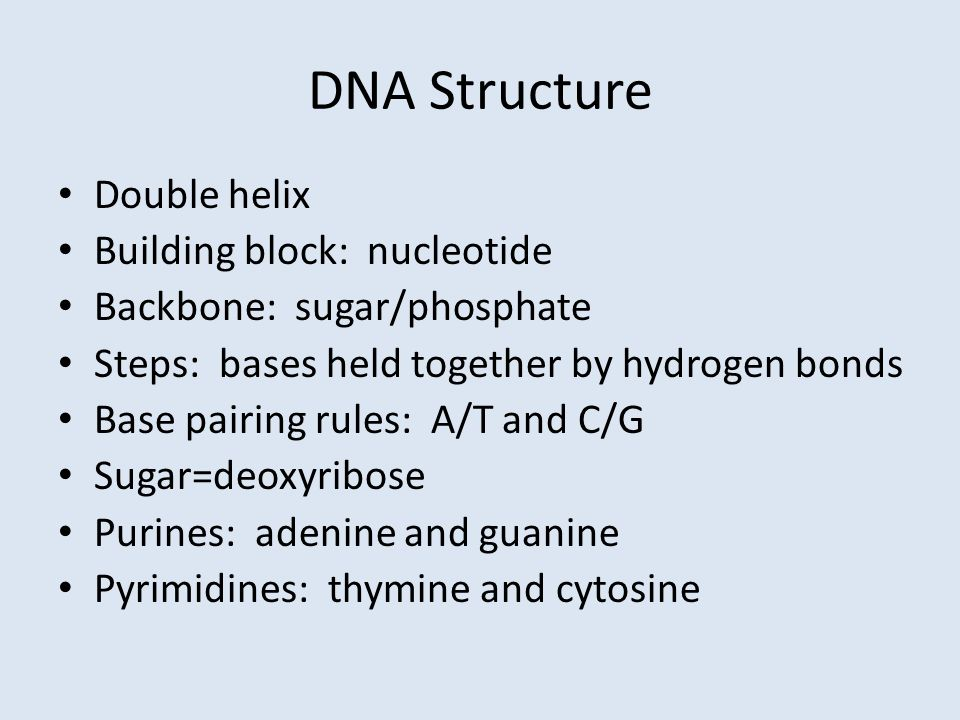 DNA Structure Double helix Building block: nucleotide