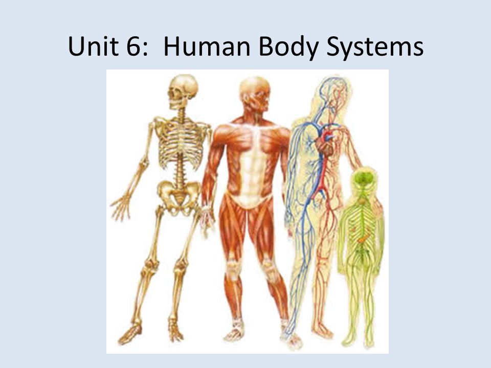 Unit 6: Human Body Systems