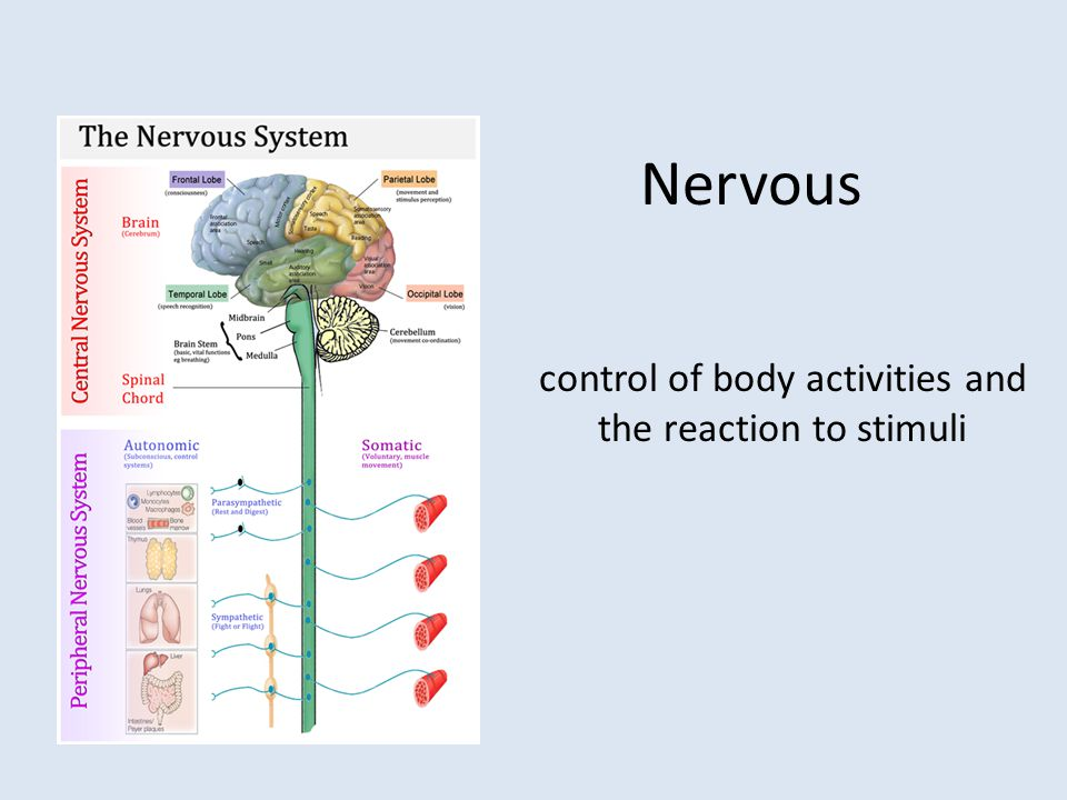 control of body activities and the reaction to stimuli