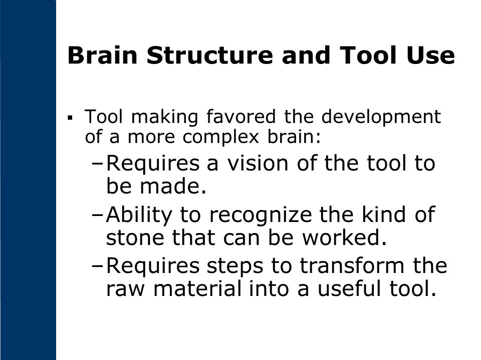 Brain Structure and Tool Use