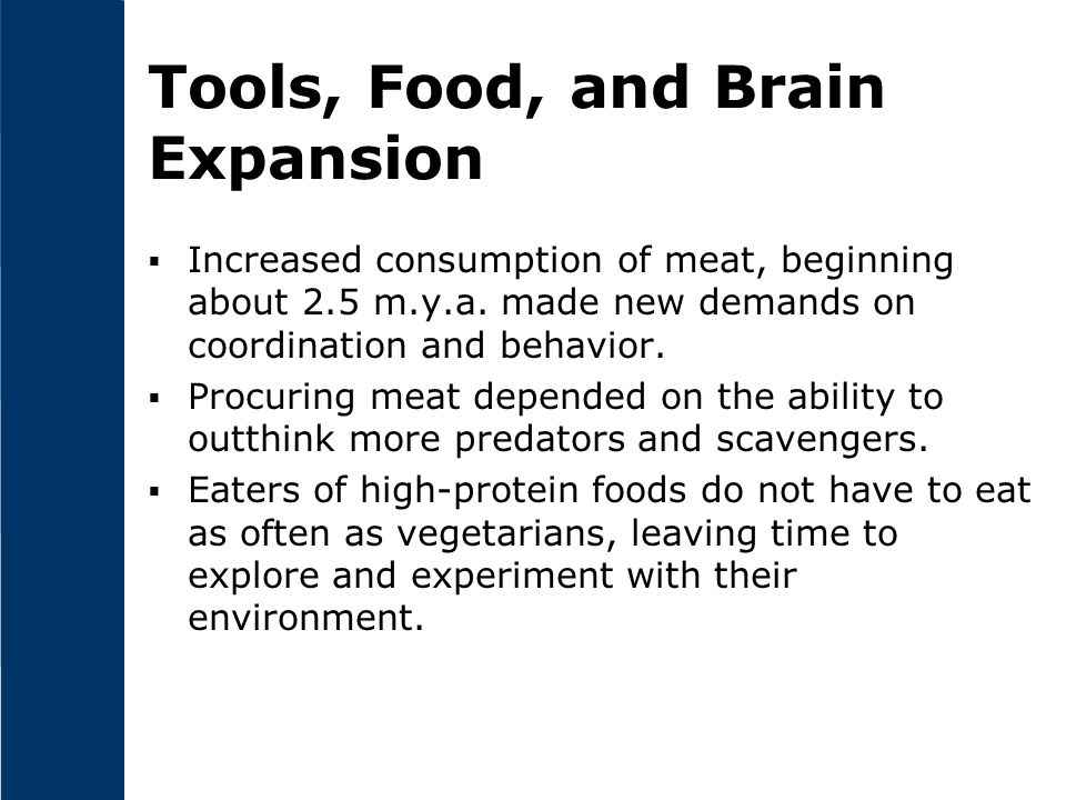 Tools, Food, and Brain Expansion