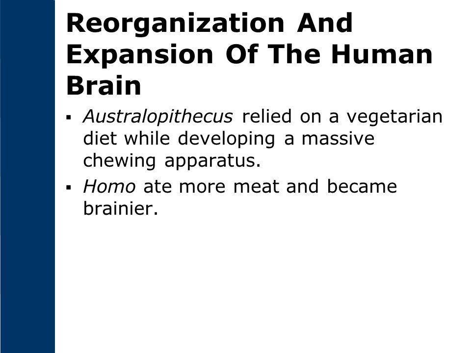 Reorganization And Expansion Of The Human Brain
