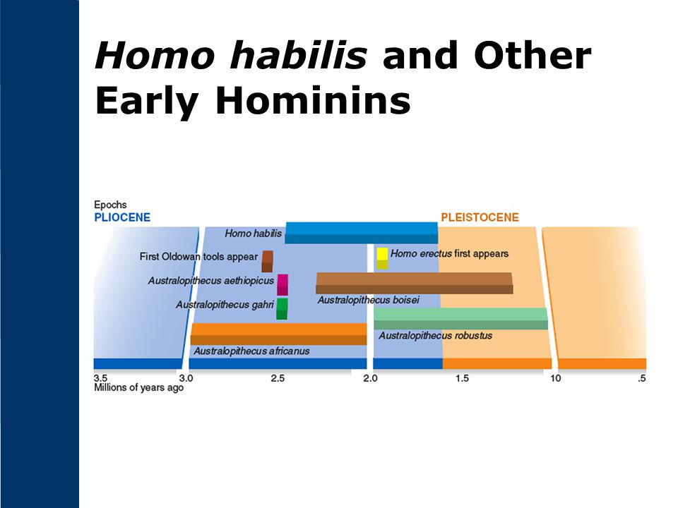 Homo habilis and Other Early Hominins