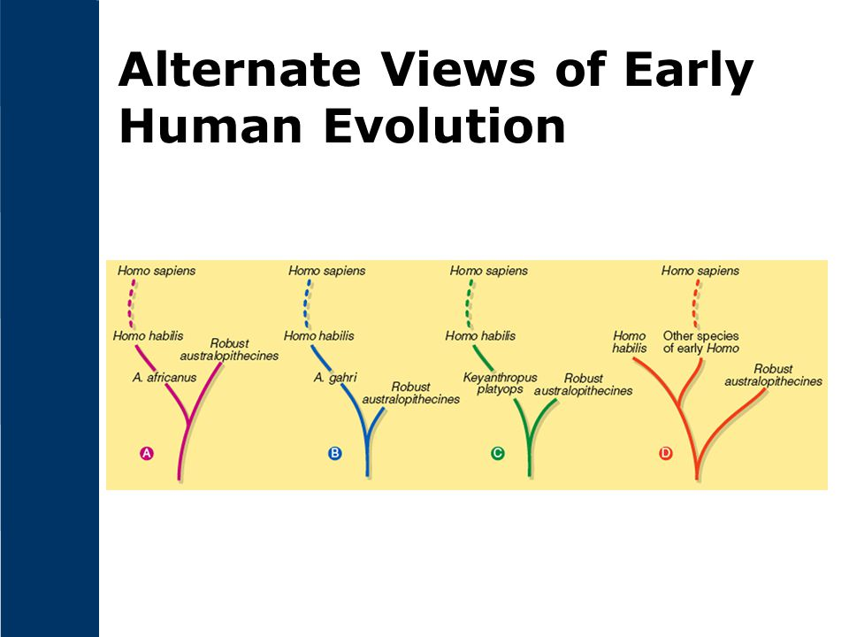 Alternate Views of Early Human Evolution