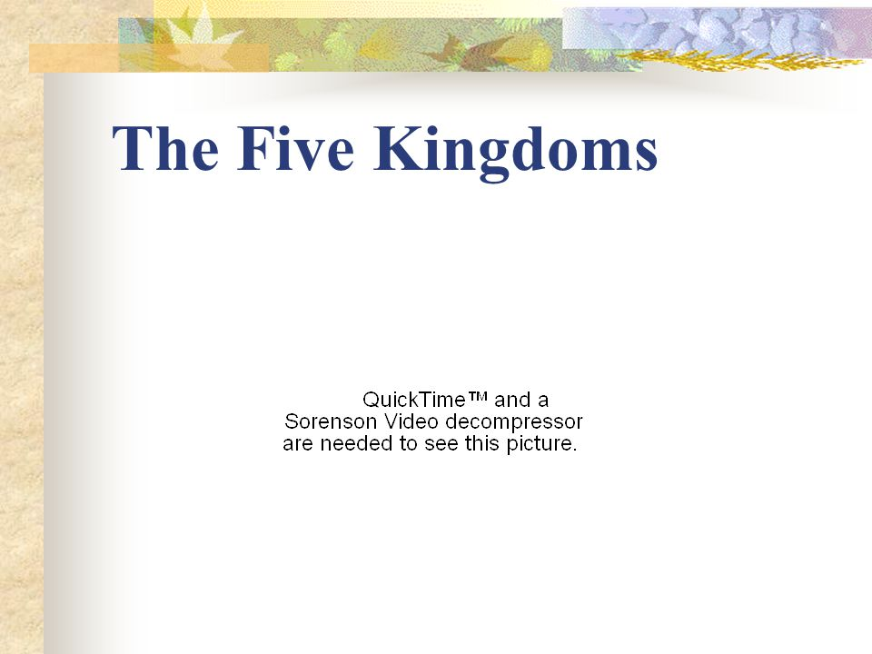 The Five Kingdoms