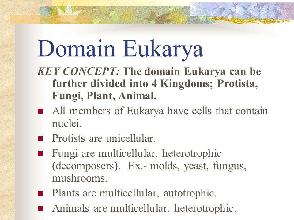 Domain Eukarya KEY CONCEPT: The domain Eukarya can be further divided into 4 Kingdoms; Protista, Fungi, Plant, Animal.
