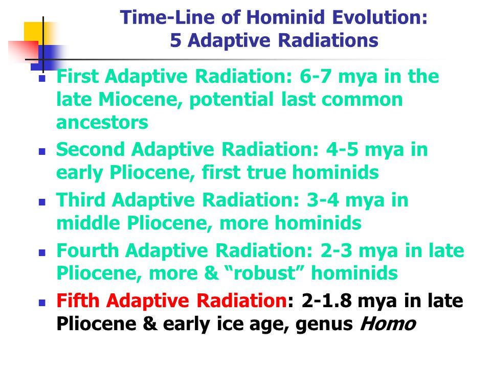 Time-Line of Hominid Evolution: 5 Adaptive Radiations
