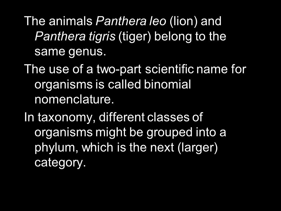 The animals Panthera leo (lion) and Panthera tigris (tiger) belong to the same genus.