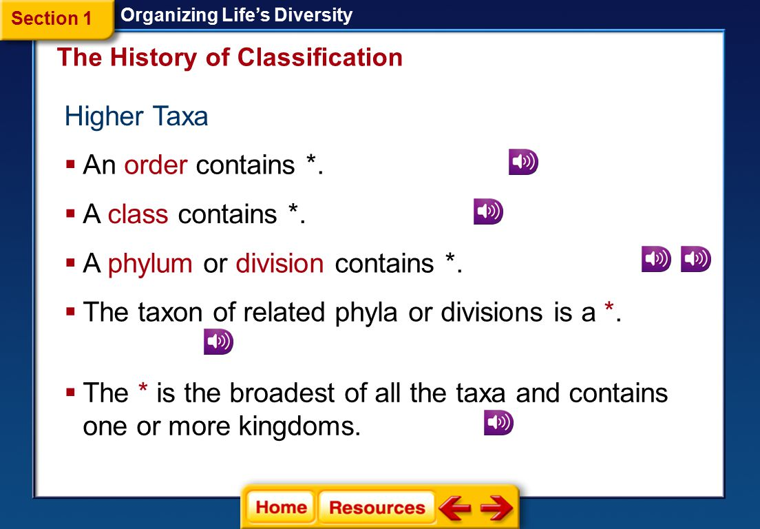 A phylum or division contains *.