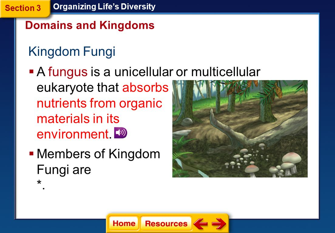 A fungus is a unicellular or multicellular eukaryote that absorbs
