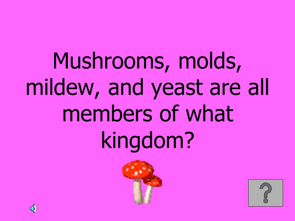 Mushrooms, molds, mildew, and yeast are all members of what kingdom