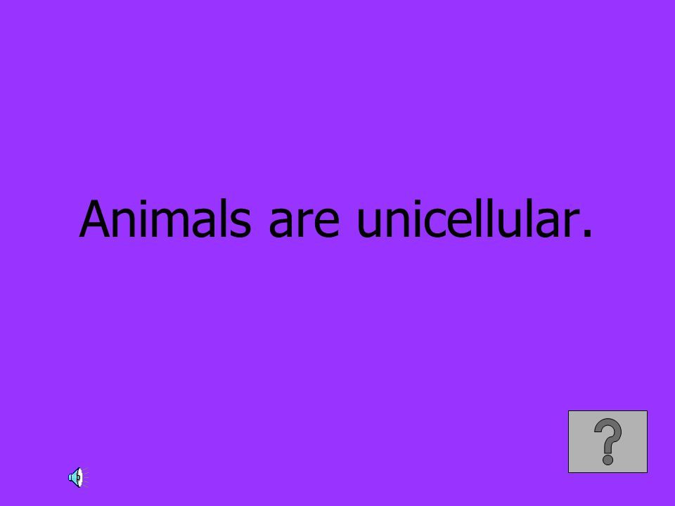 Animals are unicellular.