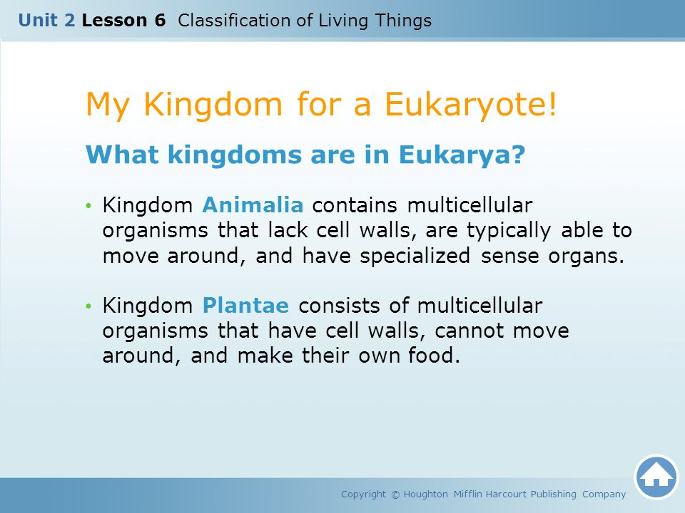 My Kingdom for a Eukaryote!