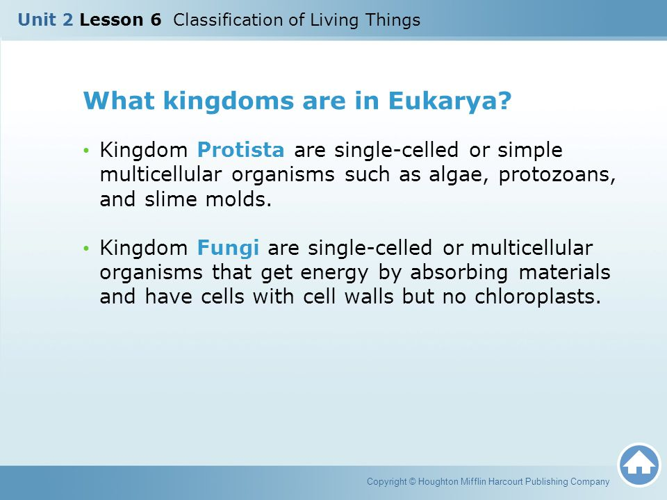 What kingdoms are in Eukarya