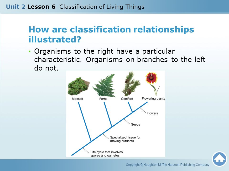 How are classification relationships illustrated