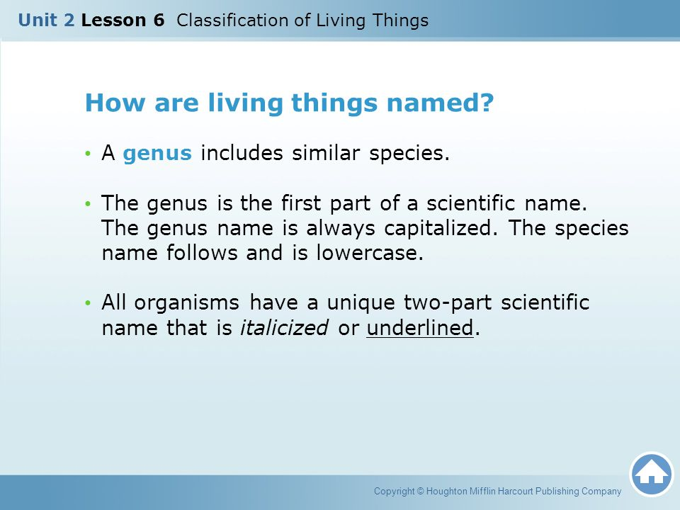 How are living things named