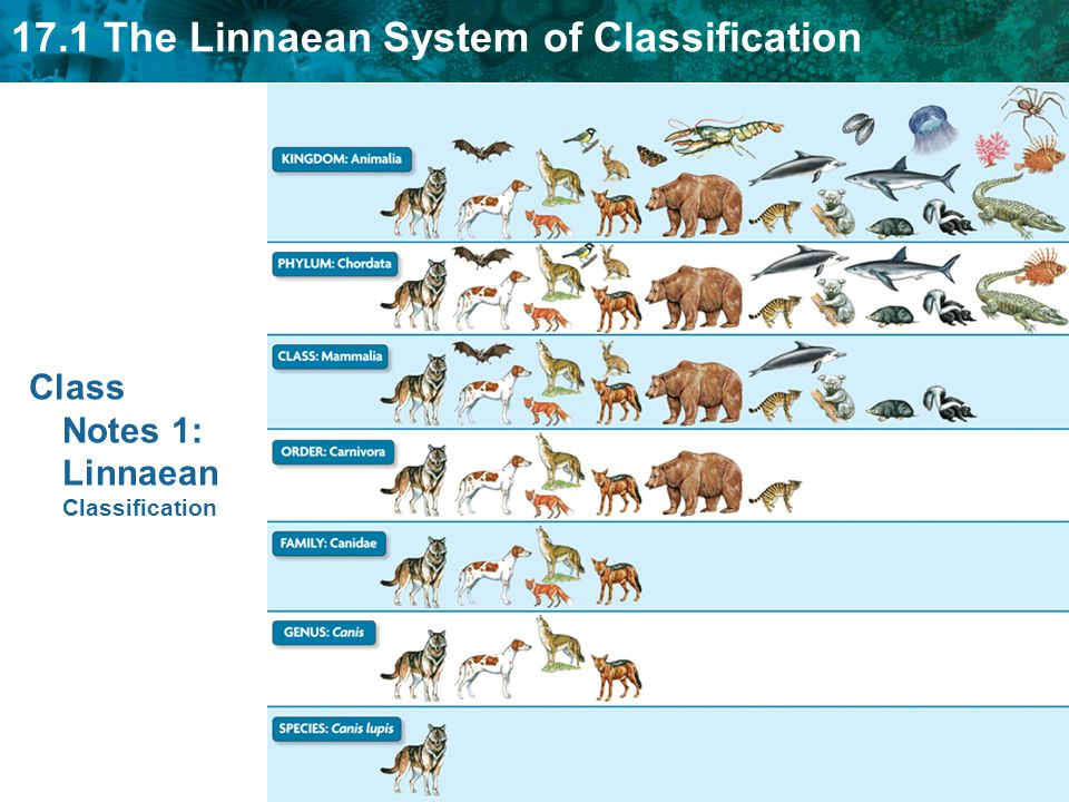 an analysis of classification in biology Classification makes things easier to find, identify, and study 3 scientific classification groups all plants and animals on the basis of certain characteristics they have in common 4 scientific classification uses latin and greek words to give each animal and plant two names (similar to a first and last name) that identify the animal or plant.
