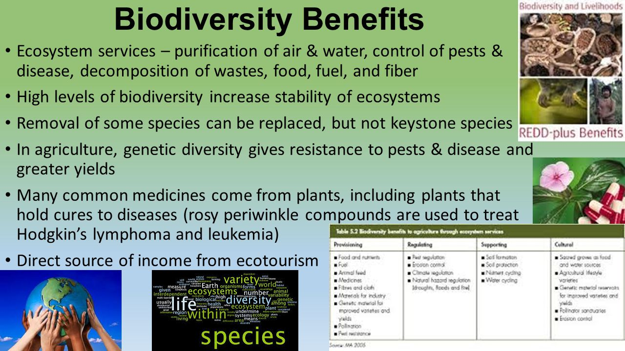 biodiversity of punjab shiwaliks environmental sciences essay Sample environmental sciences essays biodiversity of punjab shiwaliks environmental sciences essay there is an increasing awareness that biodiversity is not.