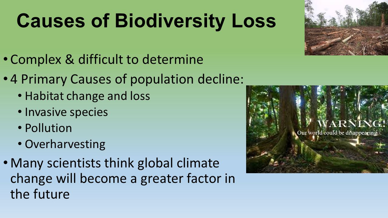biodiversity decline Biodiversity—the essential variety of life forms on earth—continues to decline in every region of the world, significantly reducing nature's capacity to contribute to people's well-being.