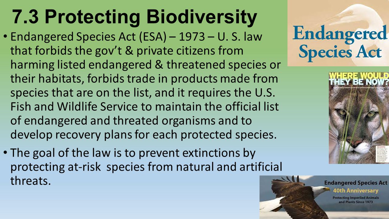 Biodiversity and Endangered Species from El Salvador