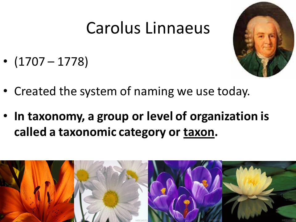 Carolus Linnaeus (1707 – 1778) Created the system of naming we use today.