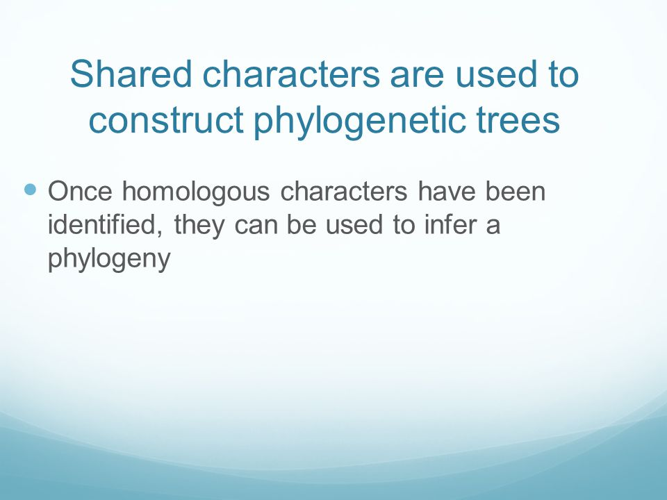 Shared characters are used to construct phylogenetic trees