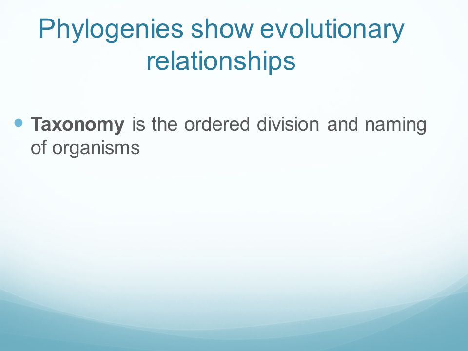 Phylogenies show evolutionary relationships