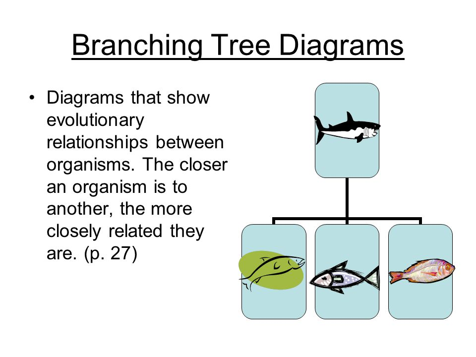 how to make a branching tree diagram
