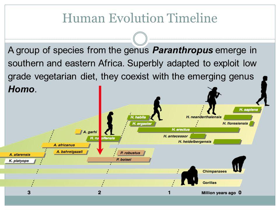 Simple human evolution timeline