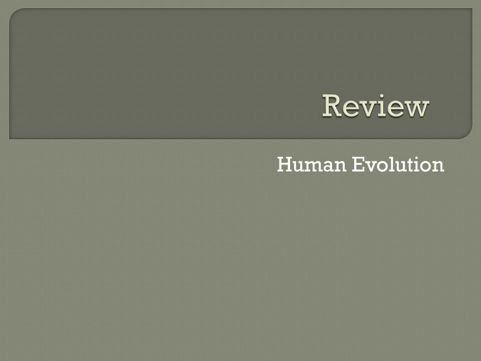 Review Human Evolution