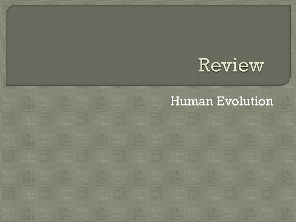 Review Human Evolution