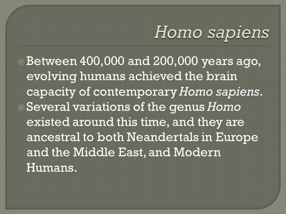 Homo sapiens Between 400,000 and 200,000 years ago, evolving humans achieved the brain capacity of contemporary Homo sapiens.