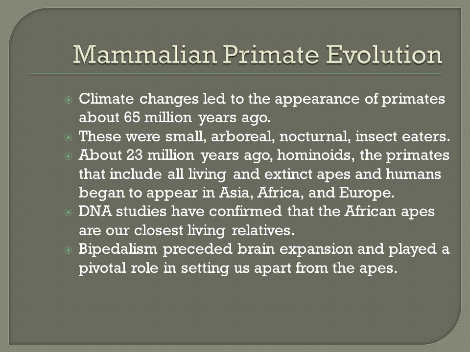 Mammalian Primate Evolution