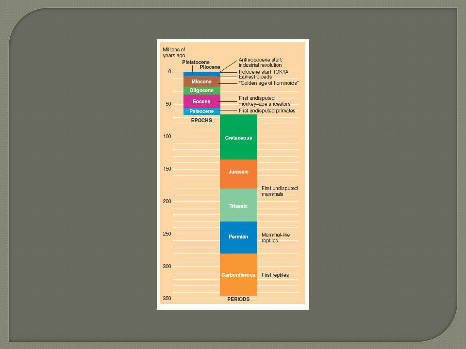 Note: Figure represents the timeline of mammalian primate evolution.