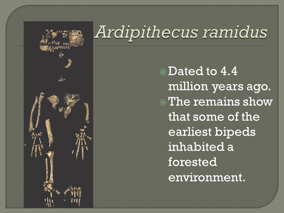 Ardipithecus ramidus Dated to 4.4 million years ago.