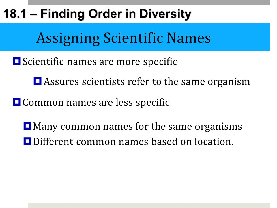how to make a scientific name for an organism