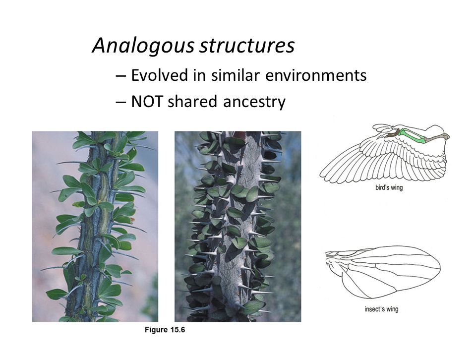 Analogous structures Evolved in similar environments