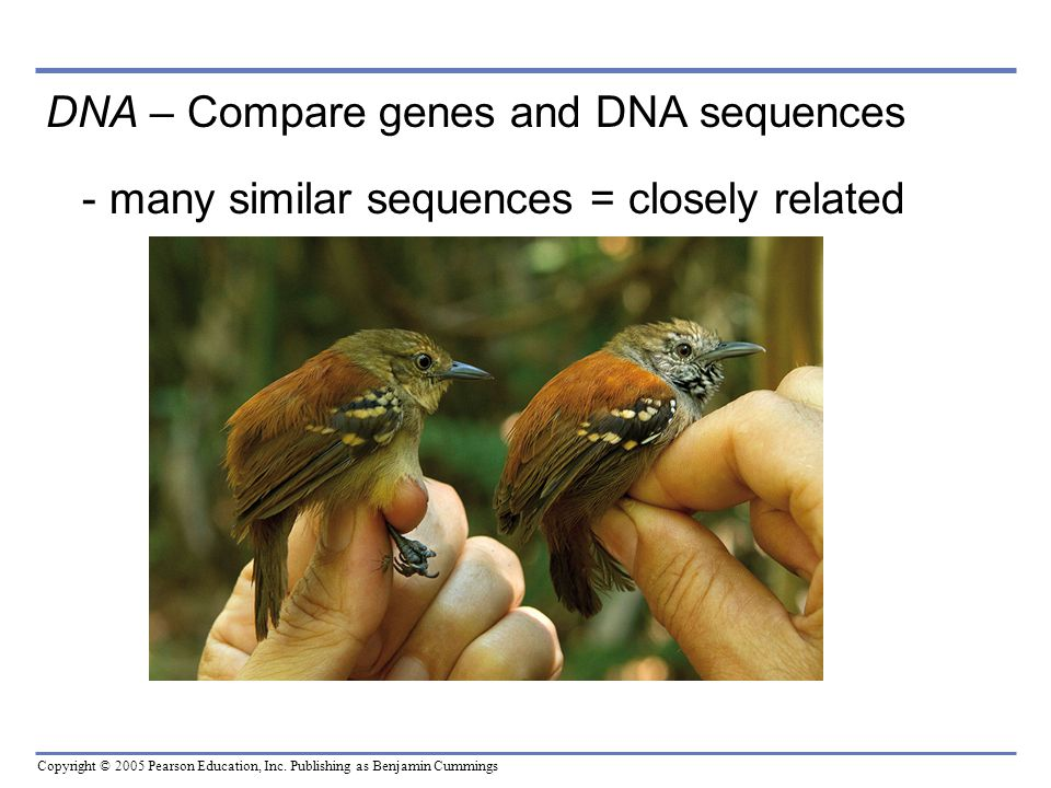 DNA – Compare genes and DNA sequences