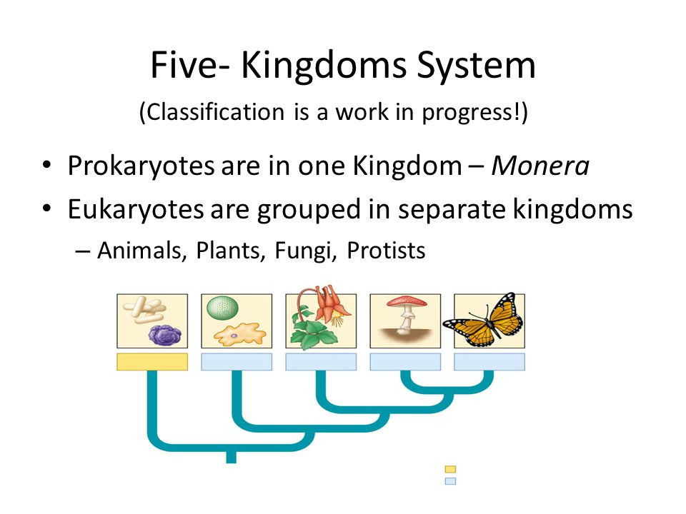 Five- Kingdoms System Prokaryotes are in one Kingdom – Monera