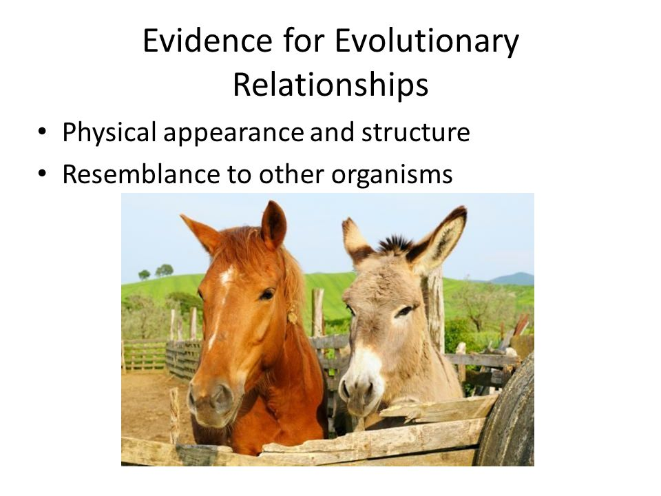 Evidence for Evolutionary Relationships
