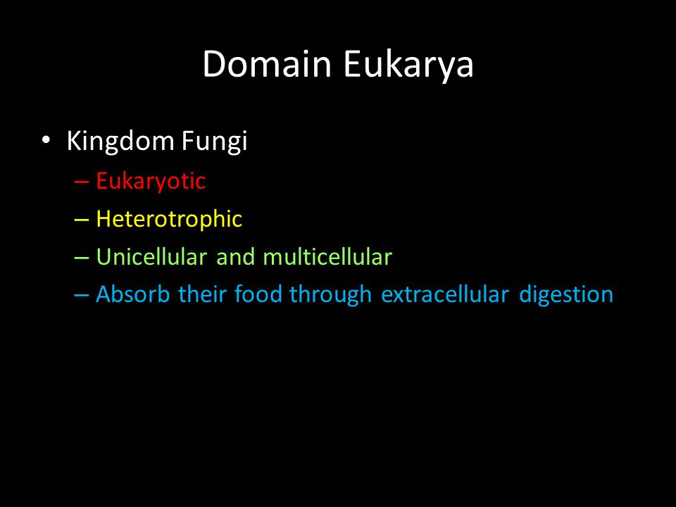 Domain Eukarya Kingdom Fungi Eukaryotic Heterotrophic