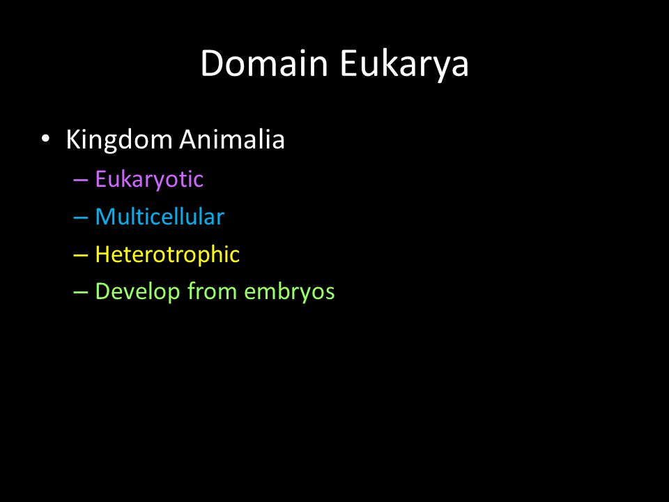 Domain Eukarya Kingdom Animalia Eukaryotic Multicellular Heterotrophic