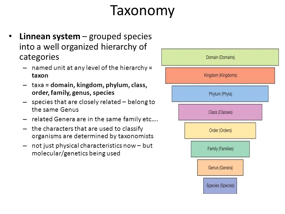 phylocode and linnean systems of classification As the linnaean classification  needed descriptions and classification the old systems made it difficult  governed by the phylocode noun linnaean .