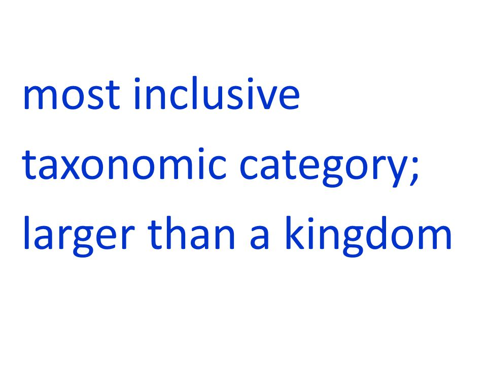 most inclusive taxonomic category; larger than a kingdom