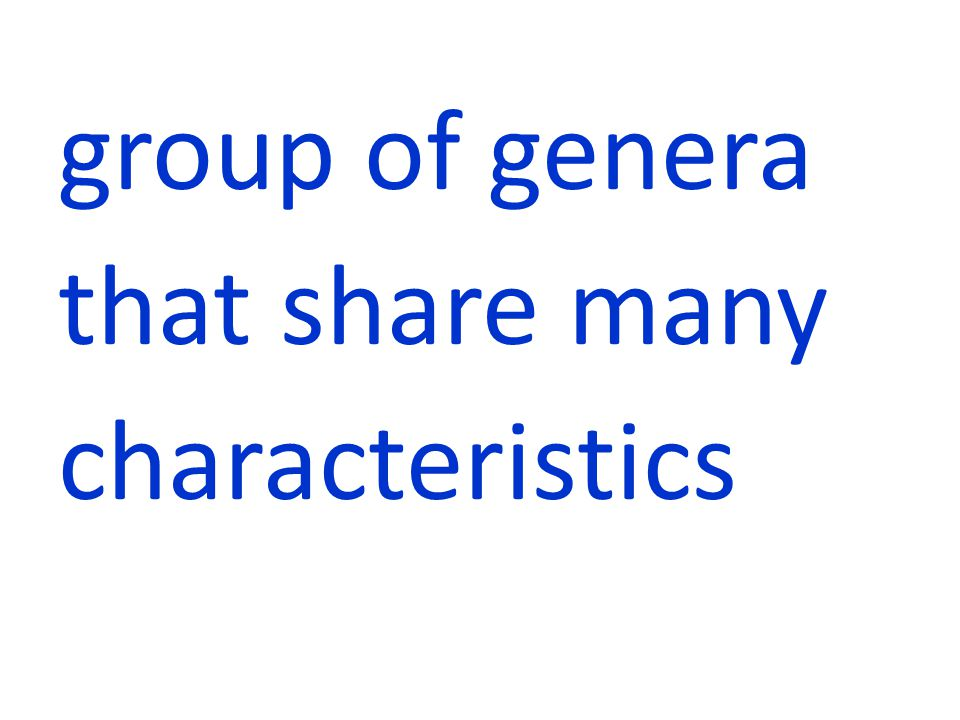 group of genera that share many characteristics