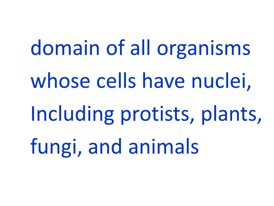 domain of all organisms whose cells have nuclei, Including protists, plants, fungi, and animals