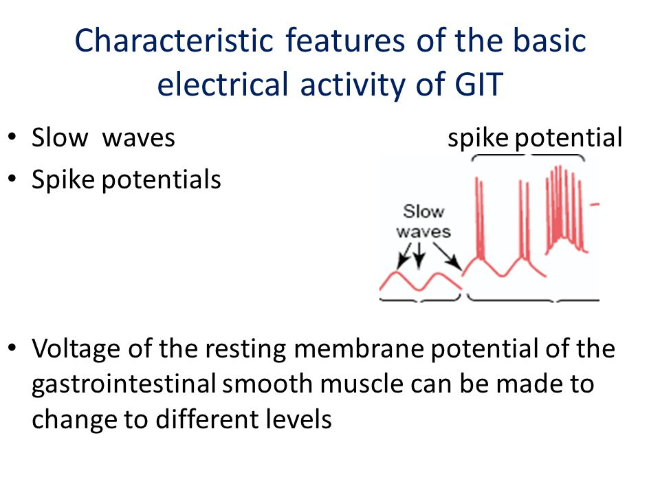 activity of gastrointestinal smooth muscle Am j med 2003 aug 18115 suppl 3a:15s-23s function of gastrointestinal  smooth muscle: from signaling to contractile proteins bitar kn(1.